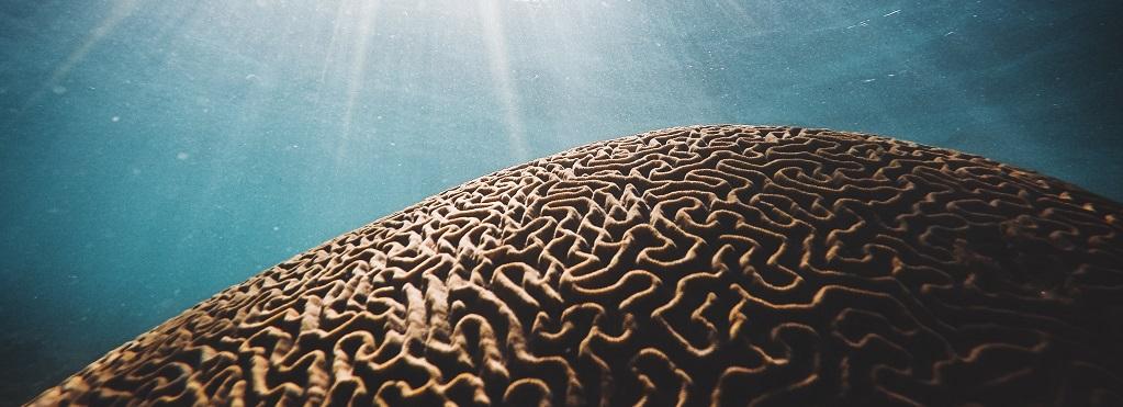 Utmattning och hjärnskador