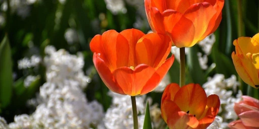 Blommor i Rådhusparken